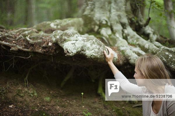 Woman touching große Baumwurzeln