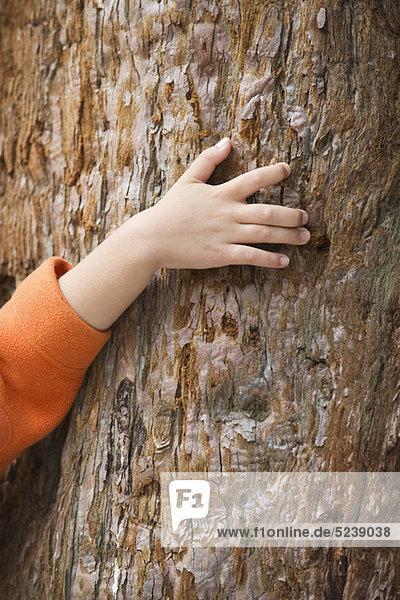 Kinderhand berühren Baumstamm