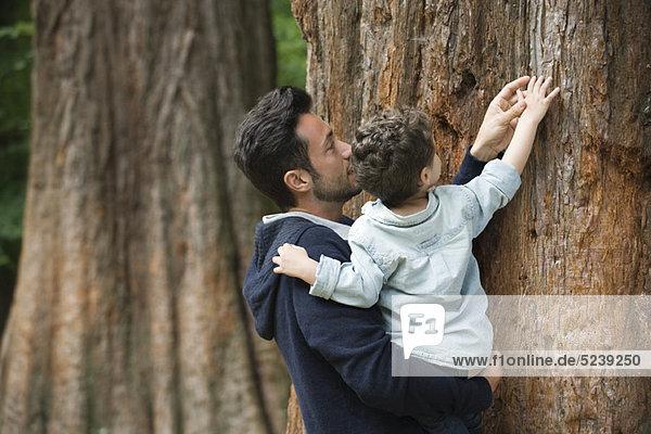 Vater und jungen Sohn berühren Baumrinde