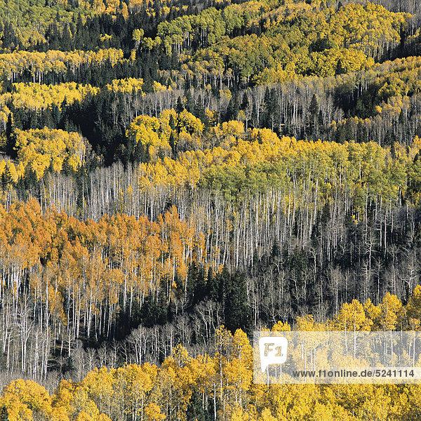 Herbstwald an Hang von oben