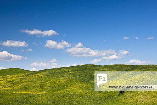 Italien  Toskana  Kreta  Val d'Orcia  Blick auf Maisfelder in hügeliger Landschaft