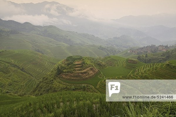 China  Loncheng  Blick auf terrassiertes Reisfeld