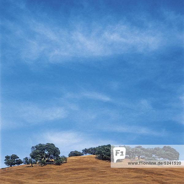 Hügel mit Bäumen  blauer Himmel