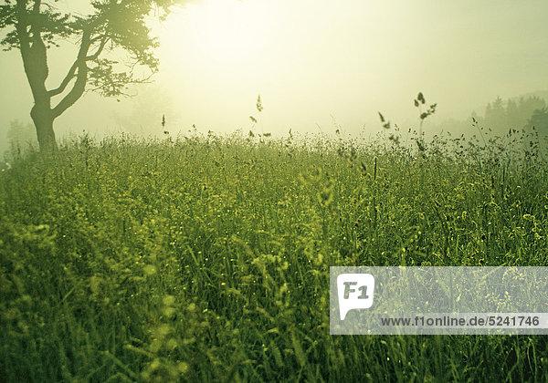 Sommerwiese  nah  starkes Gegenlicht