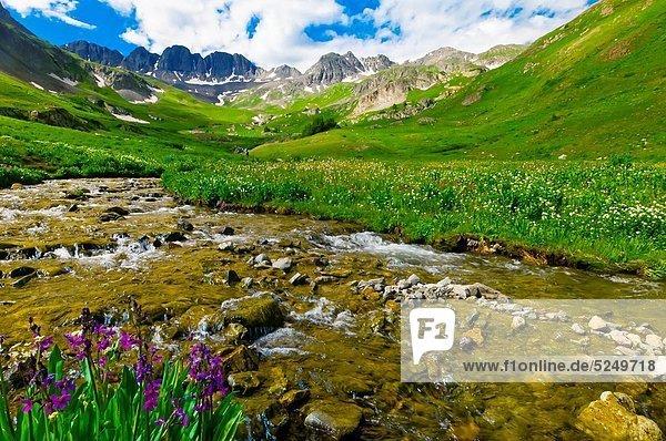 Berg  Felsen  Wildblume
