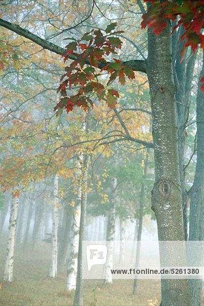 Baum Wald Herbst