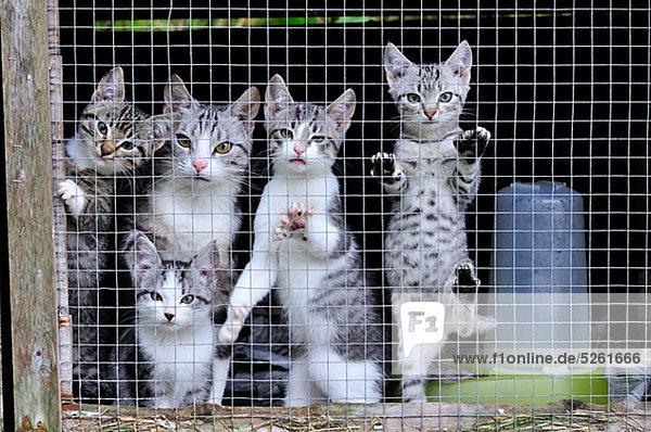Kätzchen in Käfig