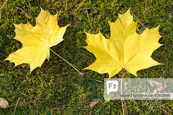 Gelbe Blätter auf Gras