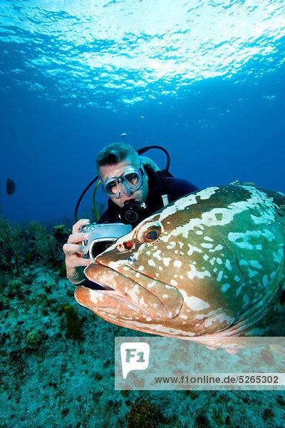Scuba diver and grouper