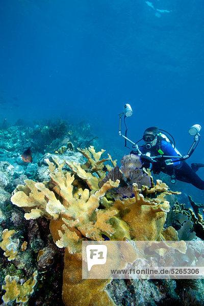 Fotograf am Korallenriff