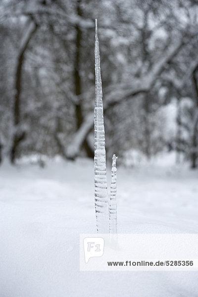Eiszapfen im winter