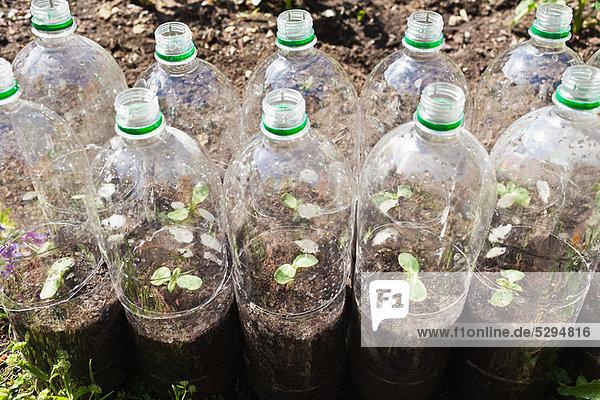 Pflanzen  die in Plastikflaschen wachsen