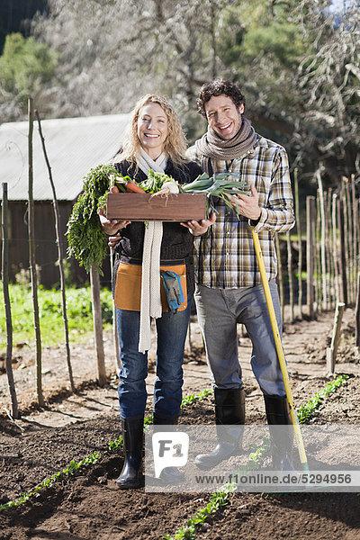 Gemüse  Garten  aufheben