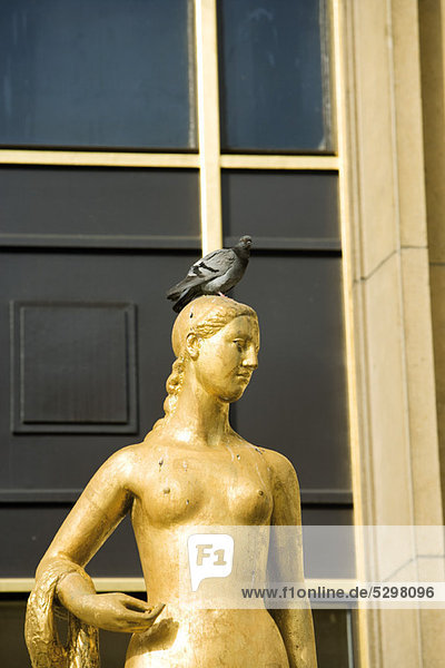 Pigeon perched on golden statue