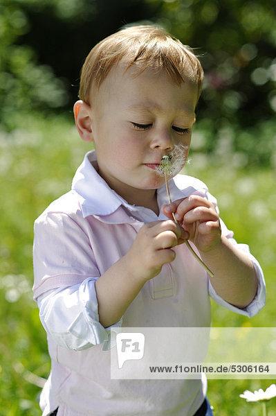 Little boy  2 years  with a dandelion clock in the garden