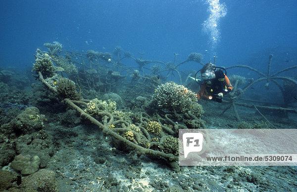 Taucher an einem künstlichen Riff für Aufbau und Reparatur von demolierten Riffen  Bali  Indonesien  Asien