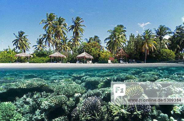 Halb-halb-Aufnahme  Korallenriff mit Hartkorallen und der Strand von der Insel Mirihi  Ari-Atoll  Malediven  Indischer Ozean  Asien