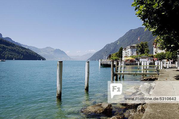 Europa Ufer See Luzern Schweiz