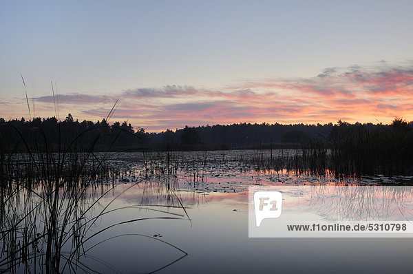 Sonnenaufgang an einem kleinen See bei Großräschen  Brandenburg  Deutschland  Europa