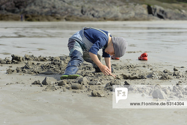 Young anglers digging for sandworms (Arenicola marina) on the beach  Atlantic Ocean  Finistere  Brittany  France  Europe  PublicGround