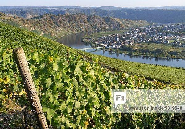 Tal  Dorf  Ansicht  Weinberg  Deutschland  Piesport