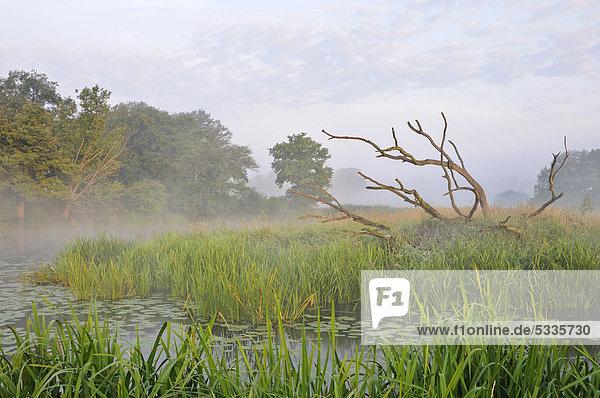 Morgenstimmung mit Nebel  Elbaue bei Dessau  Sachsen-Anhalt  Deutschland  Europa