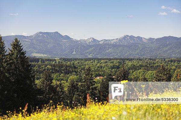 Blick vom Taubenberg bei Warngau zum Mangfallgebirge  Oberbayern  Bayern  Deutschland  Europa