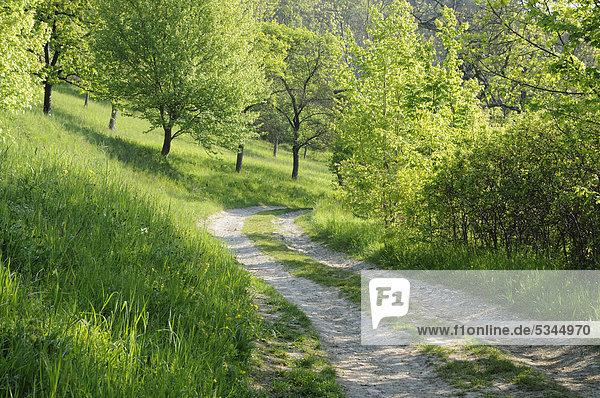 Landschaft mit Feldweg in Thüringen  Deutschland  Europa