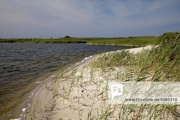Naturschutzgebiet Riedensee  Bukspitze  Ostseebad Kühlungsborn  Ostsee  Mecklenburg-Vorpommern  Deutschland  Europa  ÖffentlicherGrund