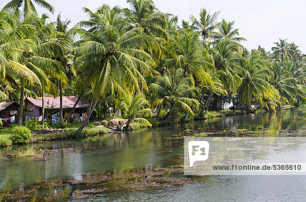 The landscape of the backwaters in Kerala  India  Asia