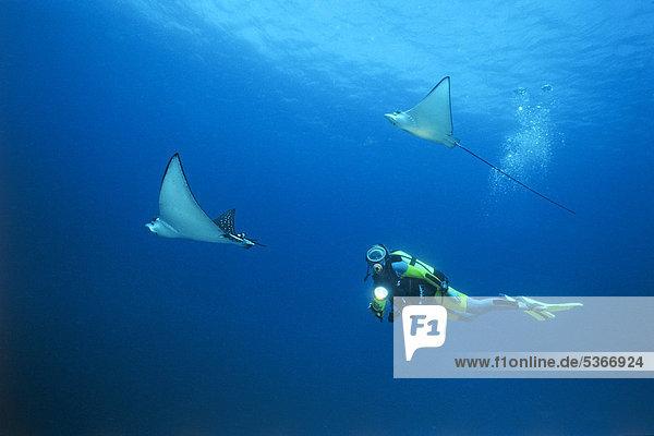 Bodenhöhe Wasser unterhalb Taucher 2 schwimmen Punkt Malediven Asien Indischer Ozean Indik