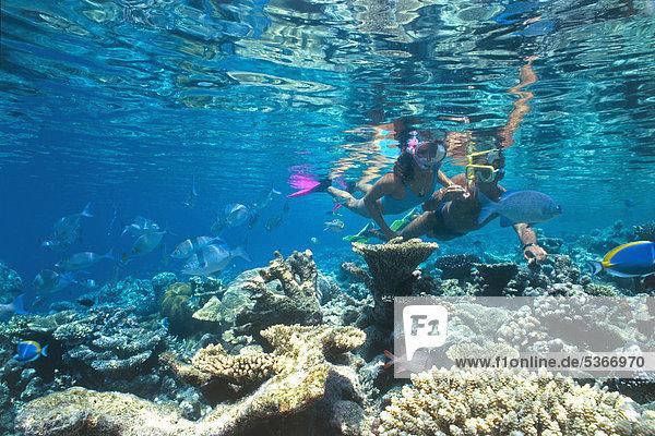 Zwei Schnorchler in einem bunten Korallenriff  Ari-Atoll  Malediven  Indischer Ozean  Asien