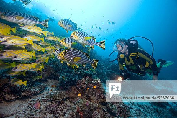 Fisch Pisces mischen Taucher Malediven Asien Indischer Ozean Indik Mixed
