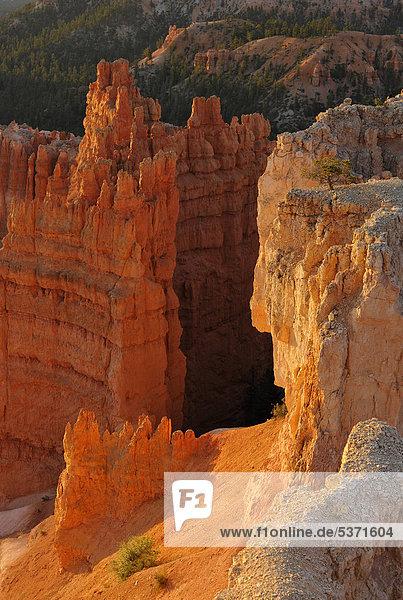 Felsformationen und Hoodoos  im Abendlicht  Sunset Point  Nationalpark Bryce Canyon  Utah  Vereinigte Staaten von Amerika  USA