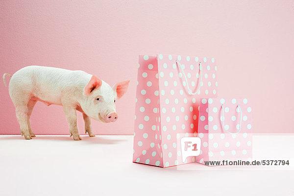 Ferkel schaut auf rosa gefleckte Einkaufstaschen