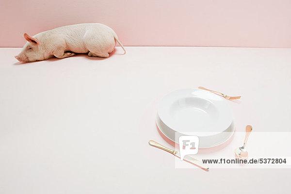 Ferkel bei leerem Teller im rosa Studio