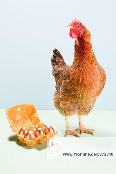 Henne steht neben goldenen Eiern  Atelieraufnahme