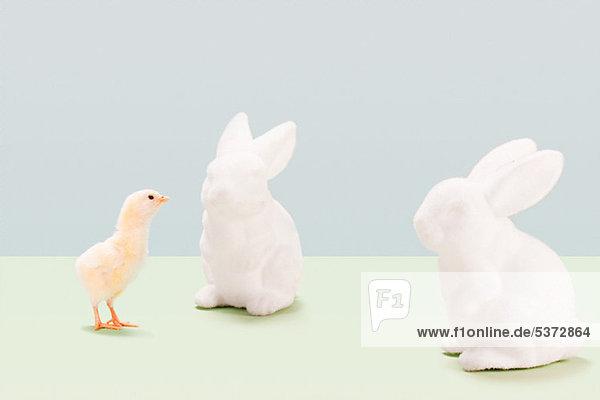 sehen Kaninchen Studioaufnahme Jungvogel Keramik sehen,Kaninchen,Studioaufnahme,Jungvogel,Keramik