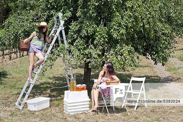 Frauen picknicken im Obstgarten
