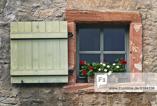 Fenster mit Geranien und Fensterläden  Eberbach  Hessen  Deutschland  Europa