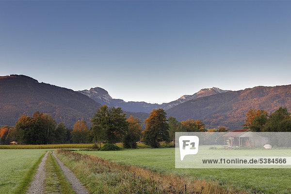 Berge Wendelstein und Breitenstein im Mangfallgebirge  Moor bei Bad Feilnbach  morgens  Oberbayern  Bayern  Deutschland  Europa  ÖffentlicherGrund