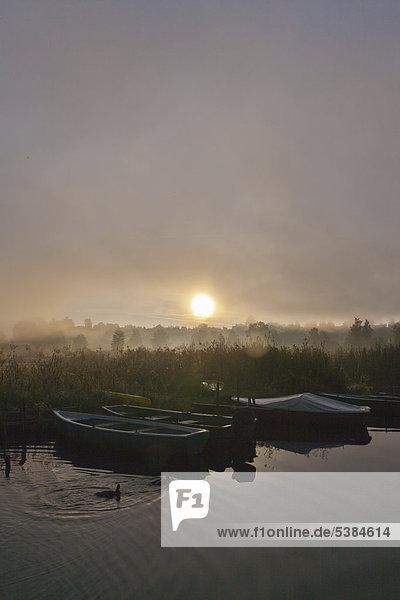 Nebel am Staffelsee mit der Insel Wörth bei Seehausen  Murnau  Oberbayern  Bayern  Deutschland  Europa  ÖffentlicherGrund