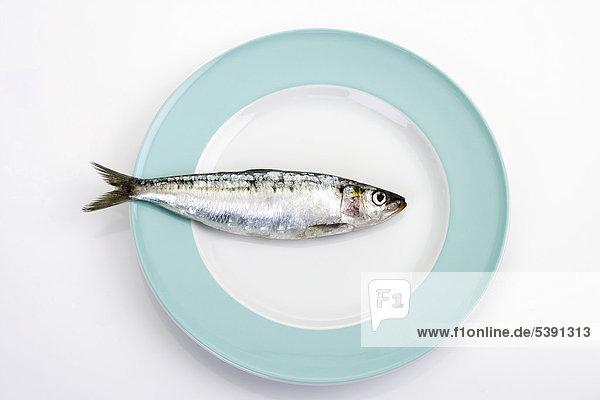 Sardine auf Teller