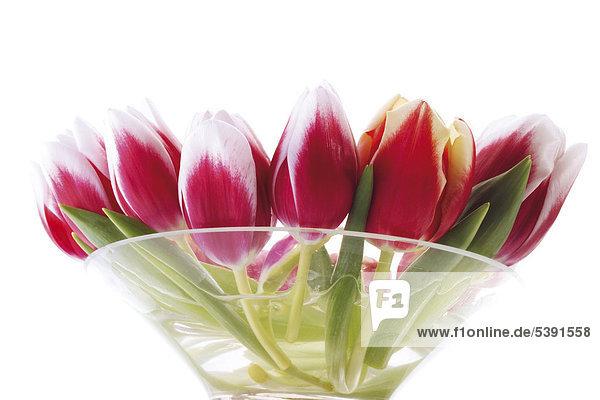 Rot - weiße Tulpen in Glasschale