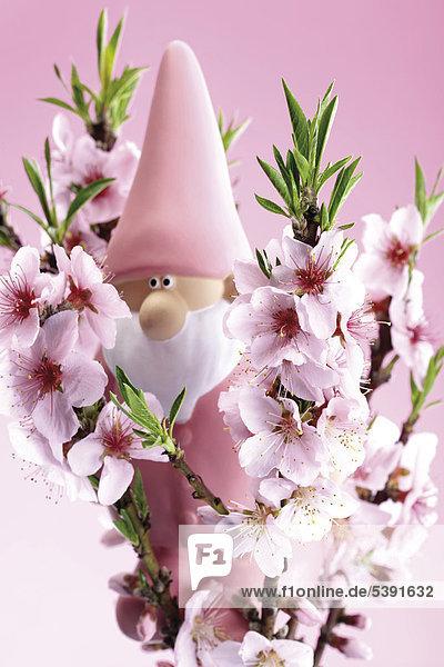 Rosa Gartenzwerg hinter Nektarinenblüten (Prunus persica) - Symbolbild für Gartensaison