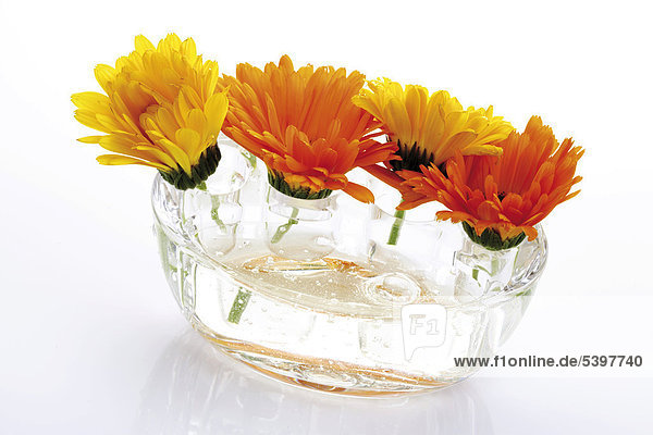 Ringelblumen (Calendula) in Glasgefäß