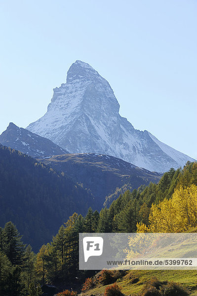 Matterhorn in herbstlich verfärbter Umgebung  Zermatt  Wallis  Schweiz  Europa