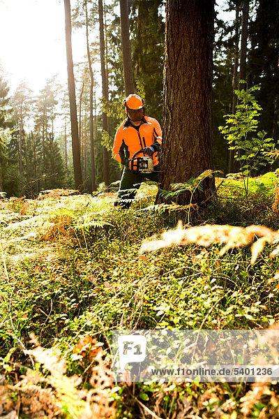 arbeiten Wald Holzfäller