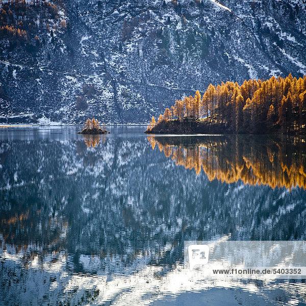 Schweiz  Europa  Engadin  Engadin  Graubünden  Graubünden  Herbst  Berge  Alpen  alpine  Schnee  Lärche  Baum  Sonne  Landschaft  alpine Landschaft  Island  Insel  Reflexion
