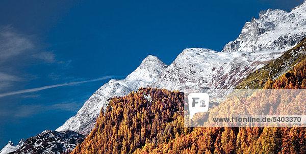 blauer Himmel wolkenloser Himmel wolkenlos Landschaftlich schön landschaftlich reizvoll Europa Berg Baum Himmel Wald Holz Alpen Herbst Kanton Graubünden Lärche Engadin Schnee Sonne Schweiz